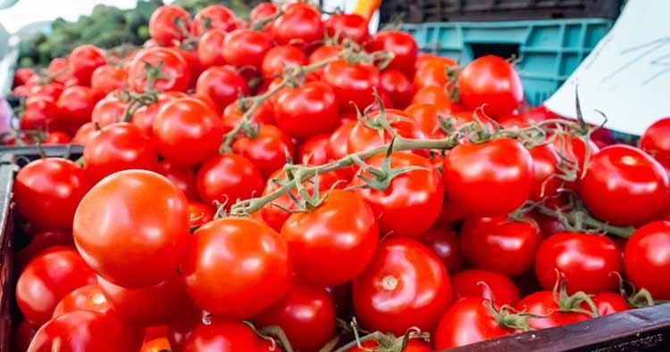 tomate-fruta-ou-legume