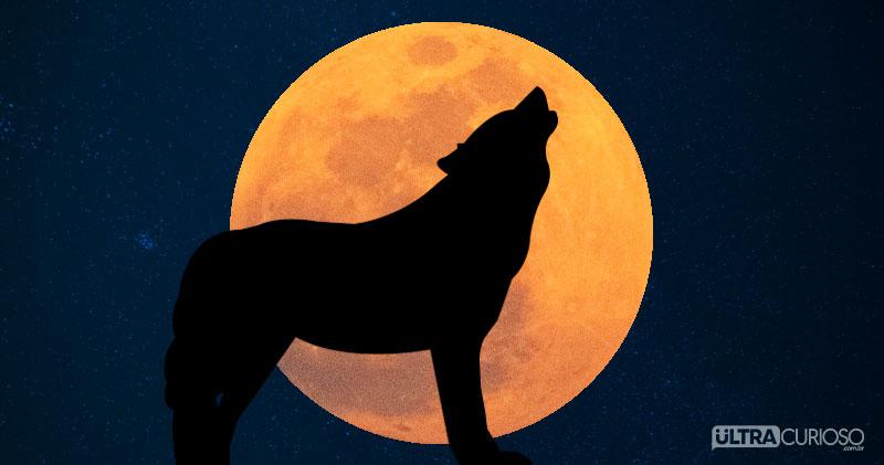 lobo-uivando