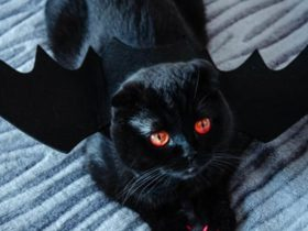 gato-preto-da-azar