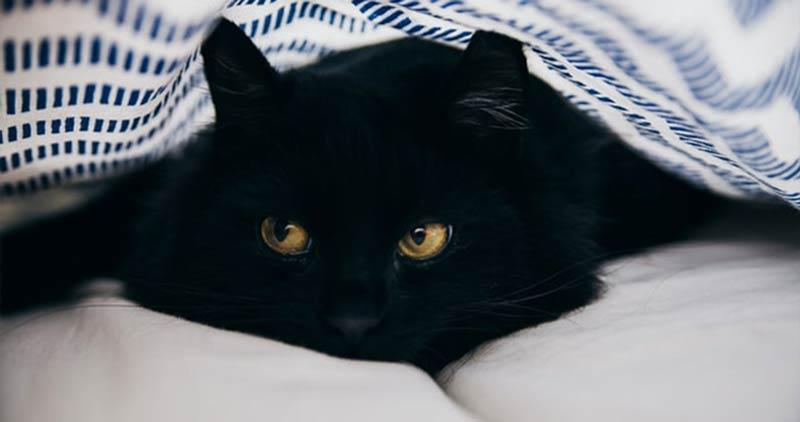 gato-preto-fofo